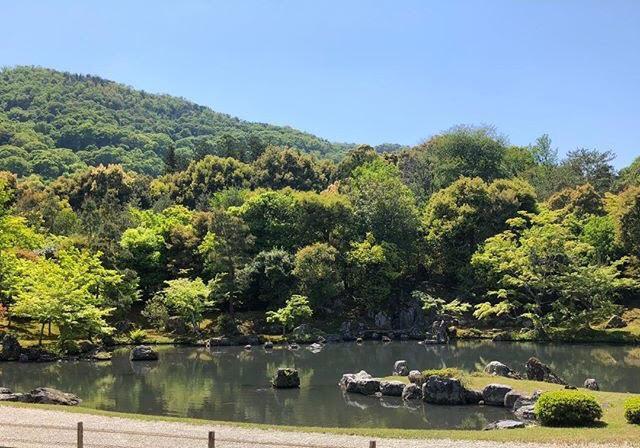 新緑の京都で「青もみじ」を楽しみませんか?
